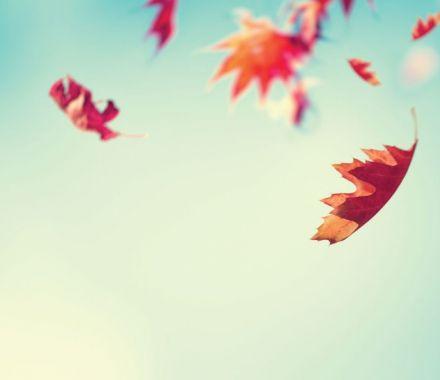 O Outono, A Crise E O Tempo Das Coisas